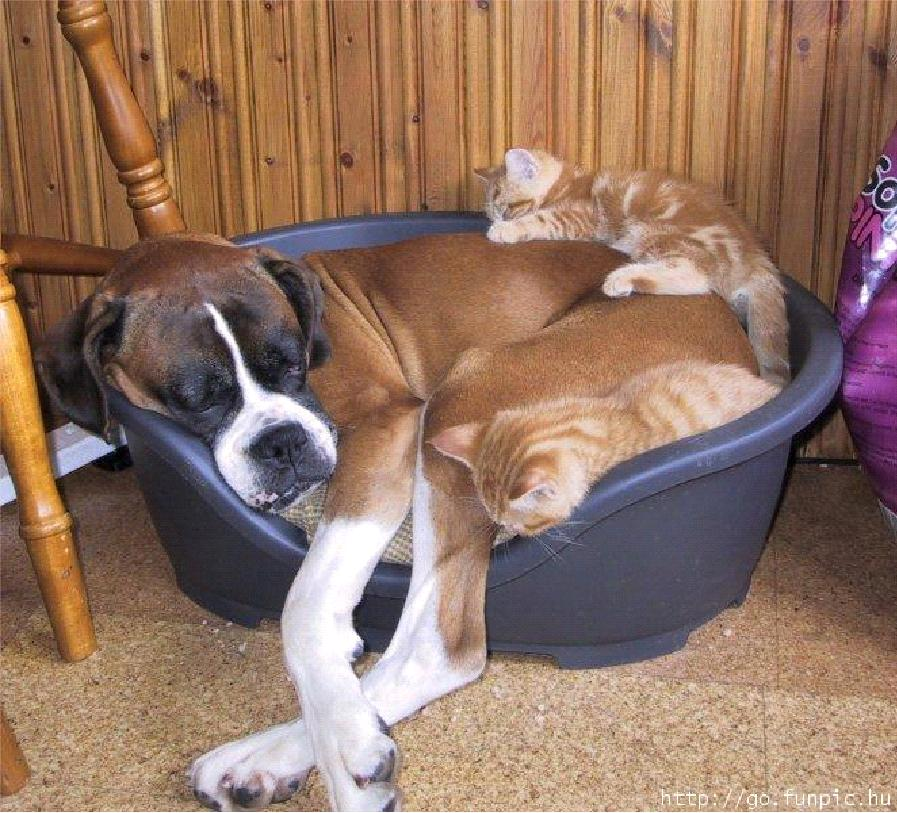 для самые смешные коты и собаки приколы предложения