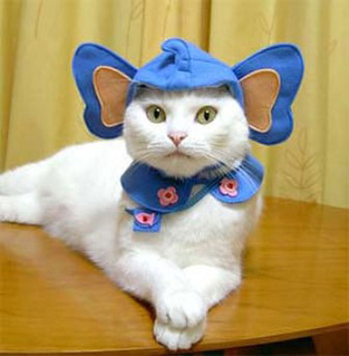 костюм котят фото