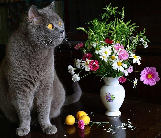Кошка с цветами открытка с днем рождения 4