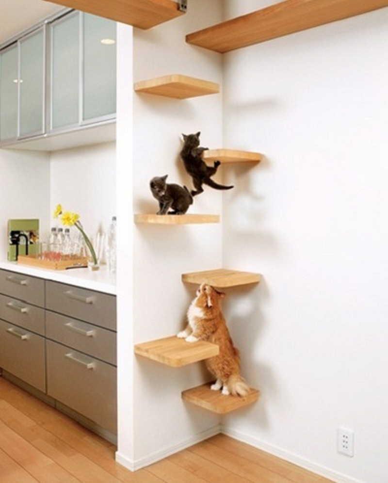 Как сделать для кошки полки на стену