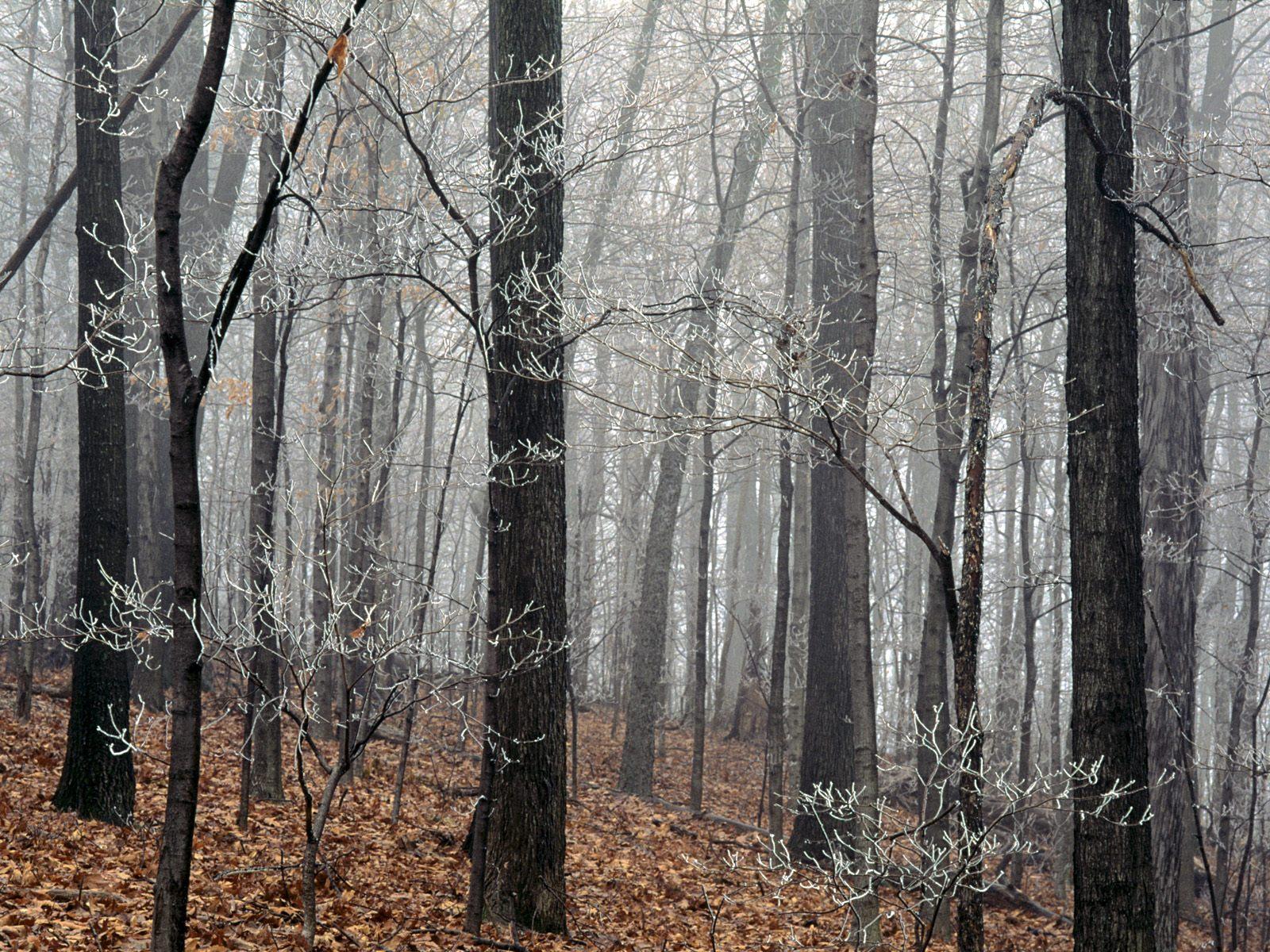 Лес обнаженный