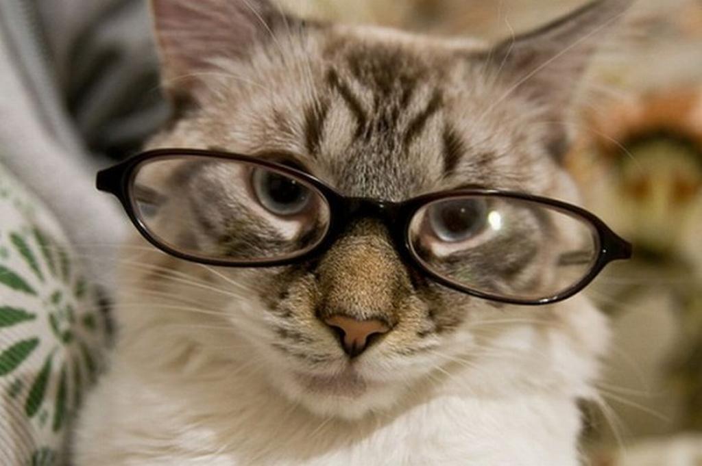 Картинки котяра в очках