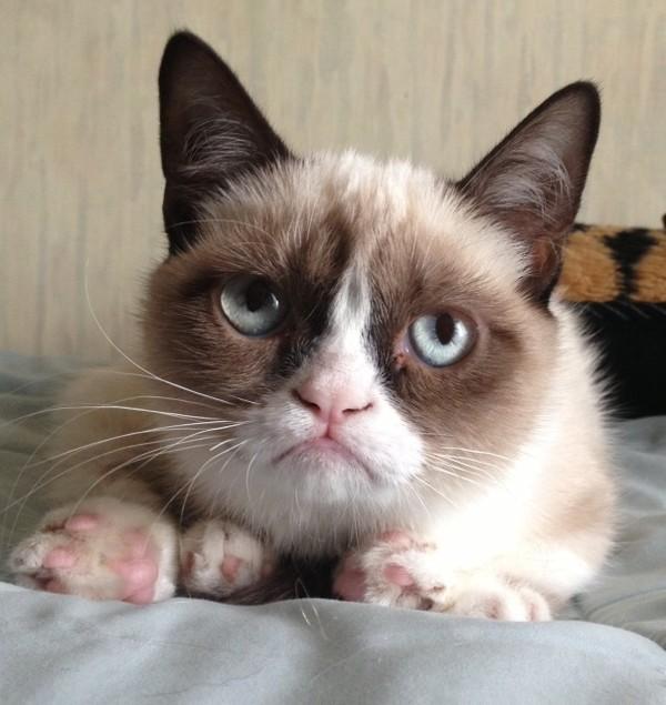 Munchkin cat medical problems