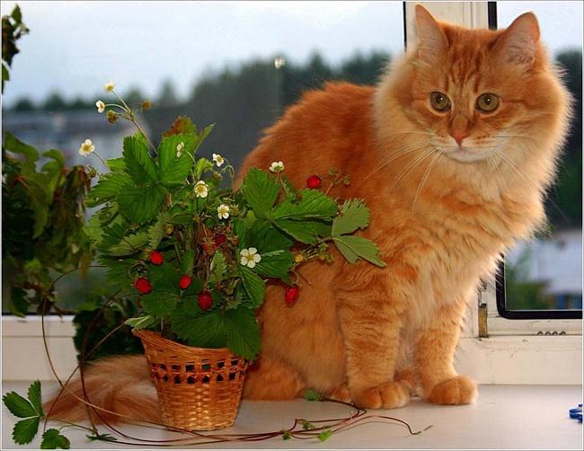 Фото рыжих котов с цветами