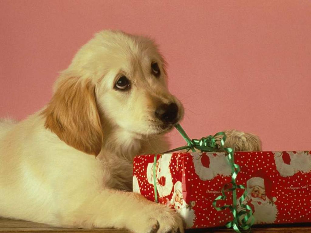 Подарок для собаководов 48
