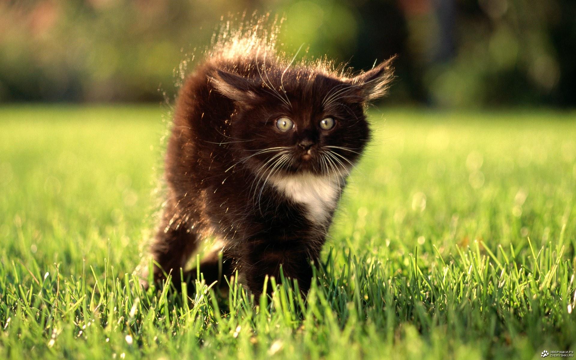 котенок хвост дыбом поле без смс