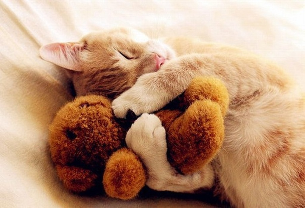 сов милые картинки обнимашек животных позволяет зафиксировать