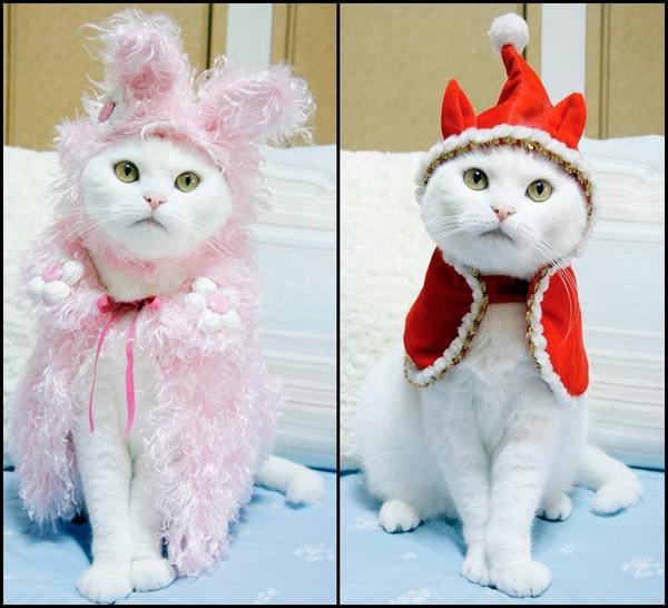 Костюм для котёнка своими руками
