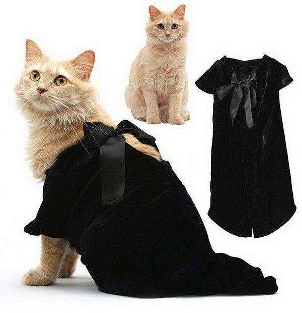 Мода для котов Лолкот.Ру