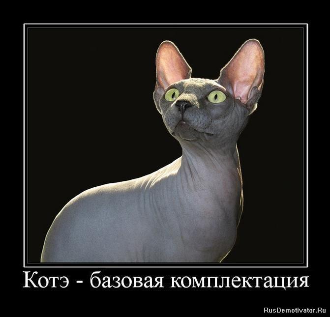 Демотиваторы коты смешные