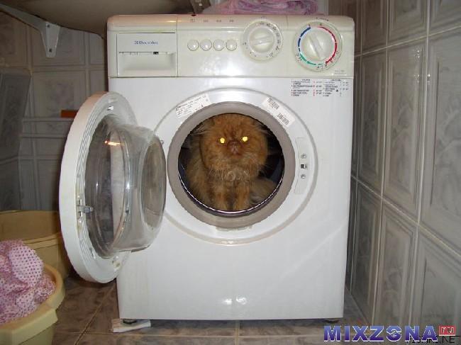 Приколов хомяках, смешные картинки стиральной машины